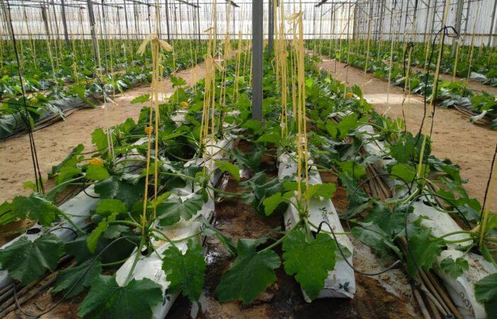 Invernaderos con cultivo hidropónico 1