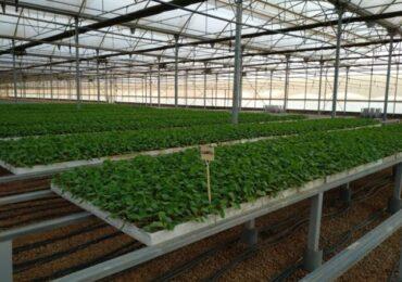Producción de plantas en nuestro Semillero 1