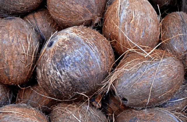 Coconut hard shell