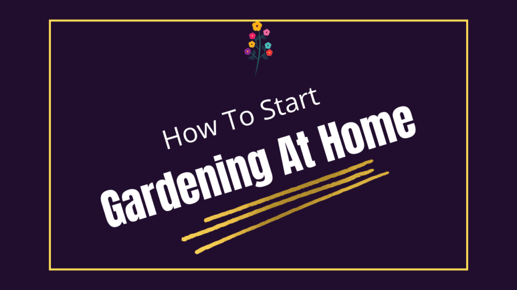 Gardening at home in India