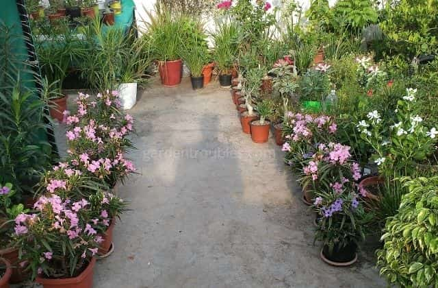 Gardening in India at home