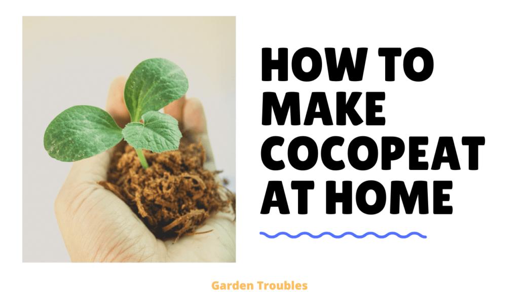 Make coco peat at home