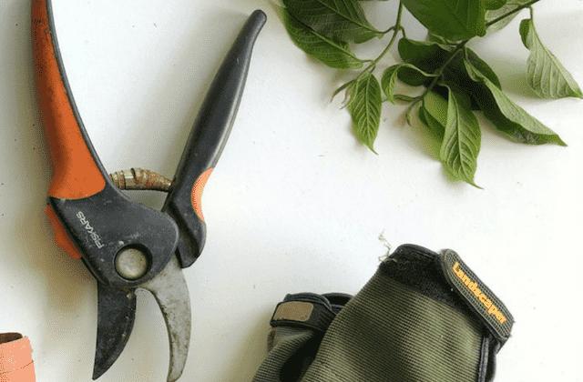 Pruner For Gardening