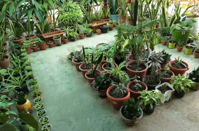 different plants to grow at home in india