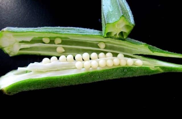 Seeds of Lady Finger