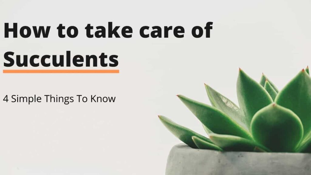 How to take care of succulents in India