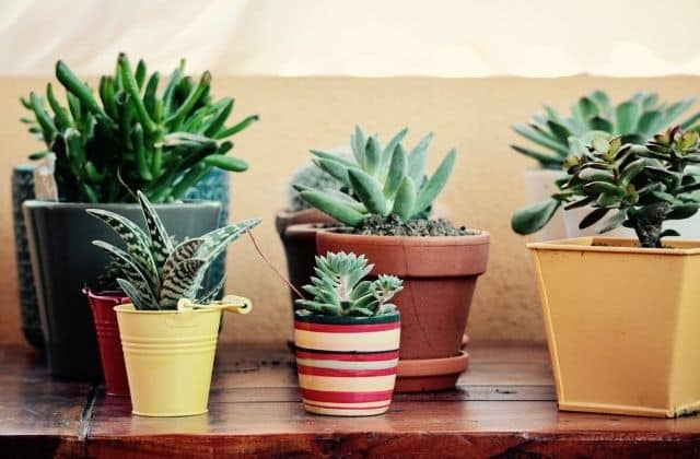 pots for gardening at home