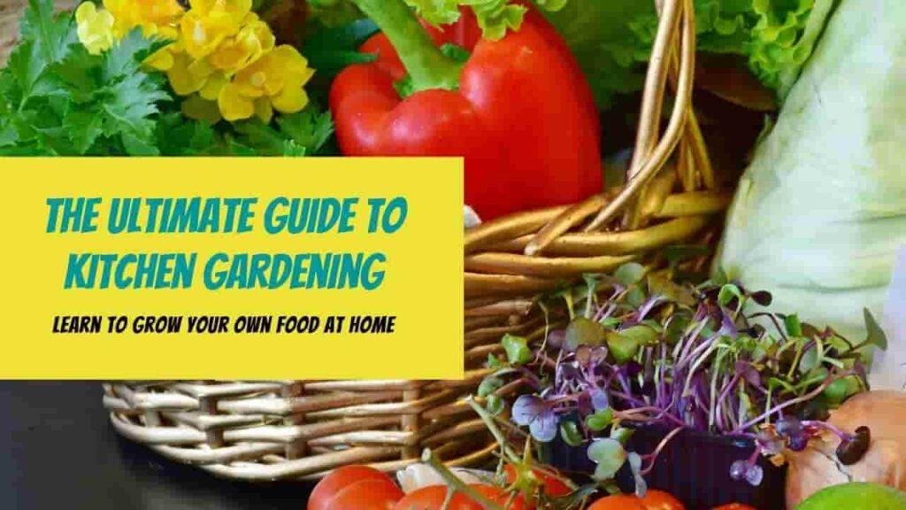 Kitchen Gardening India