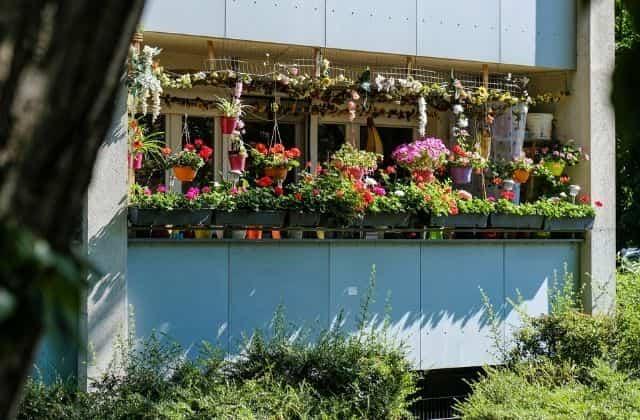 Balcony Gardening in full swing