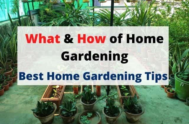 Home Gardening Tips For Beginners