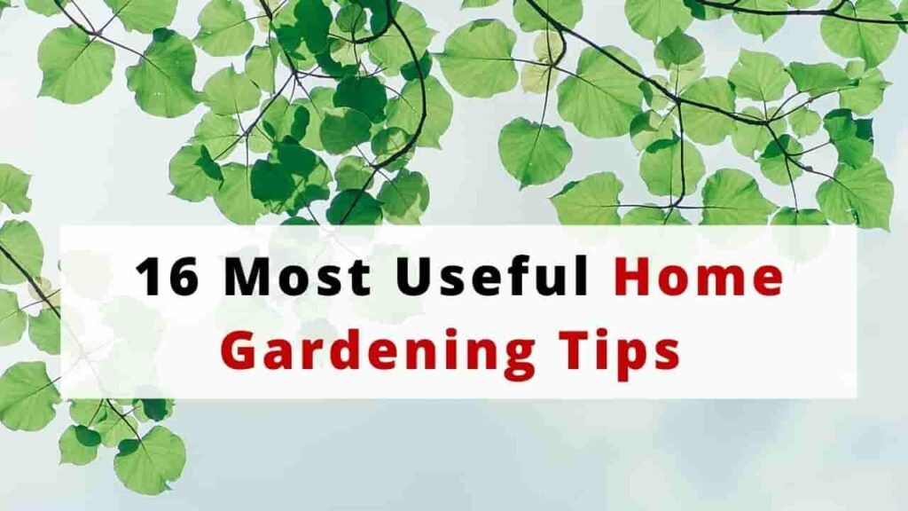 Home Gardening Tips India