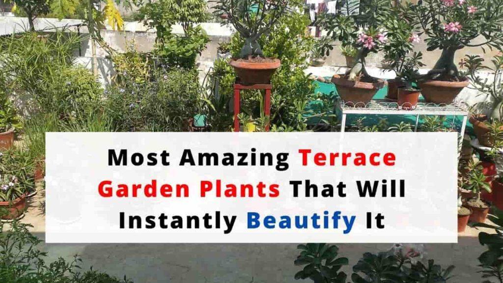 Plants For Terrace Garden