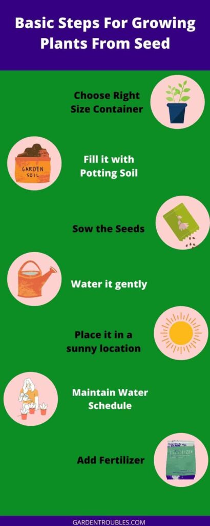Steps for growing plants from seeds