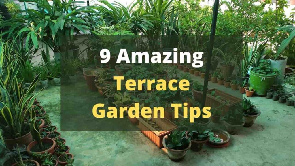 Terrace Garden Tips For Beginners