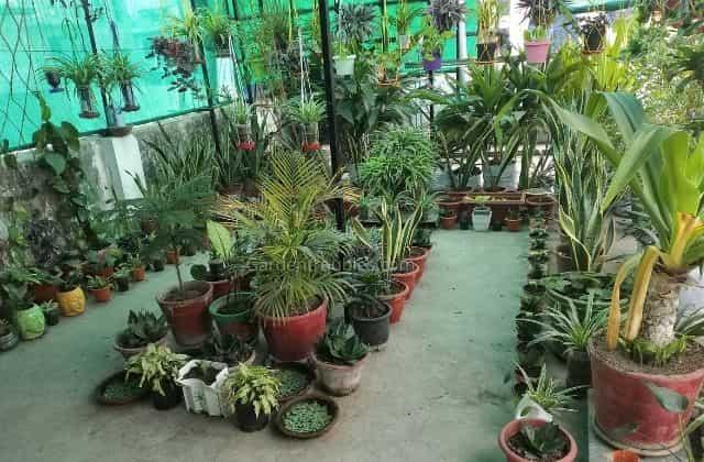 Terrace Gardening In India