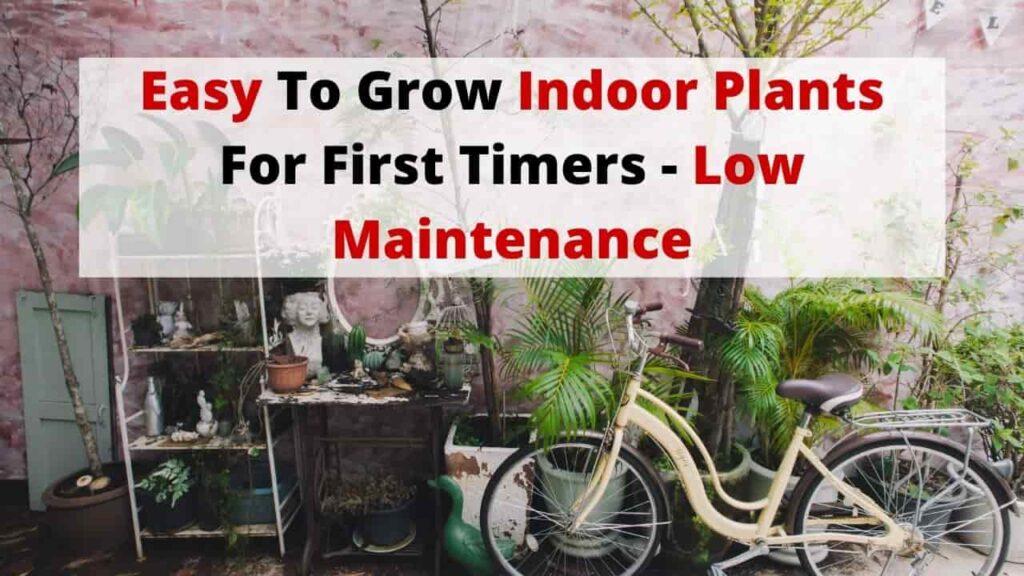 low maintenance easy to grow indoor plants