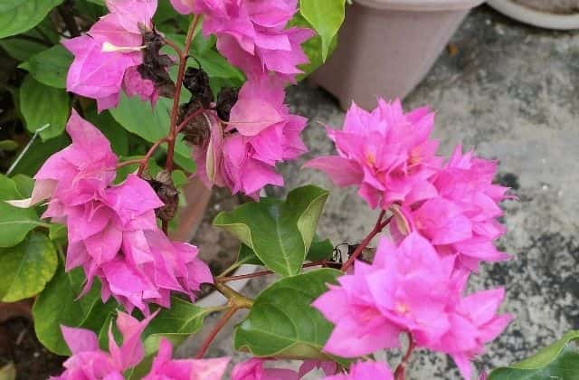 most beautiful terrace garden plant