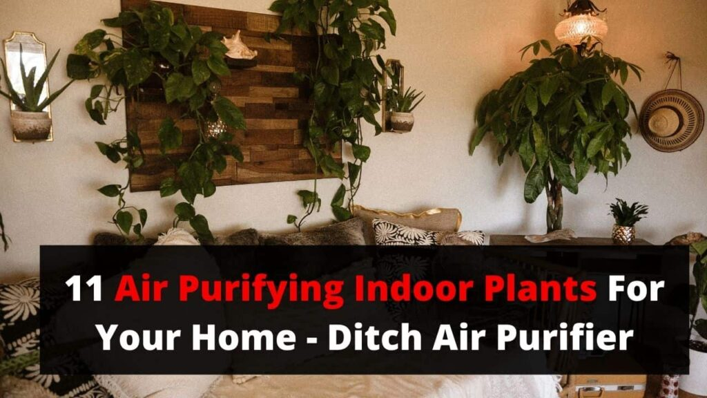 indoor plants that purify air