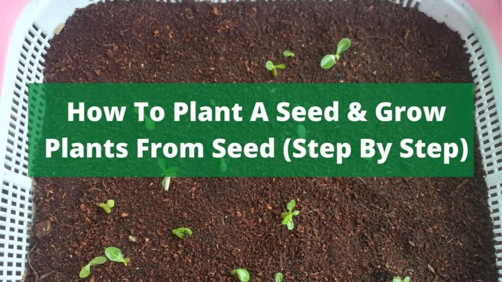 How To Plant A Seed - How to Grow Plants From Seed