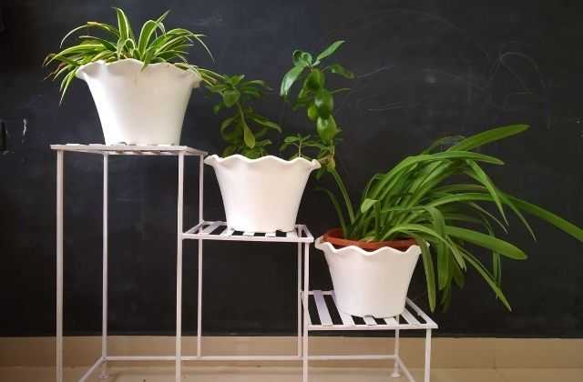 Indoor Plant Stands For Multiple Plants In India