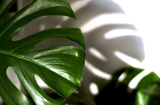 attractive indoor plants for office desk