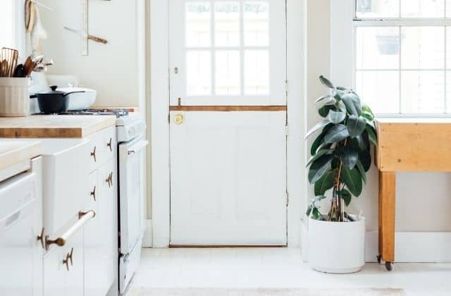 Amazing indoor bedroom plant