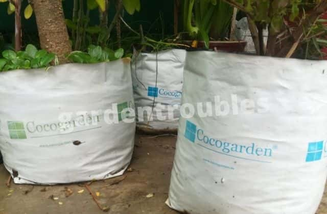 Grow Bag Size for Vegetables