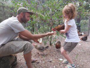 permaculture practice martin chickens la bruguera