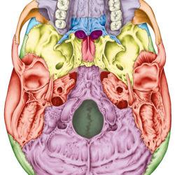 Skull Base Surgery ent360