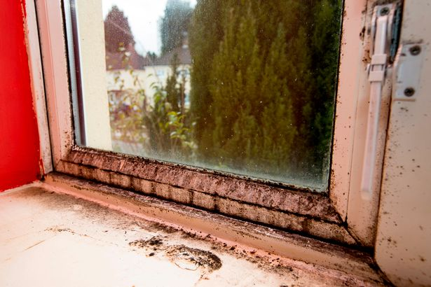 Mould, damp and faults: Are these the worst council houses in Birmingham?
