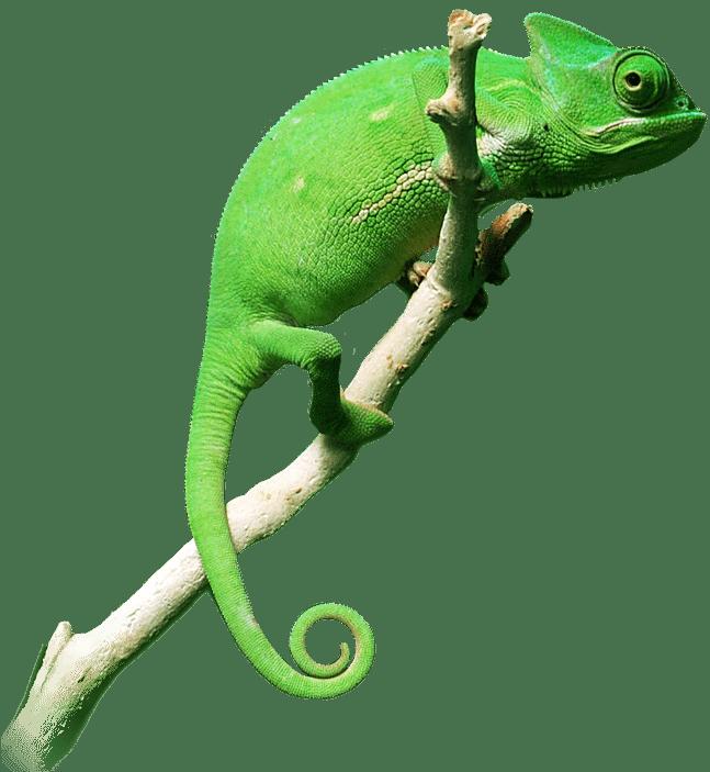 cs-chameleon