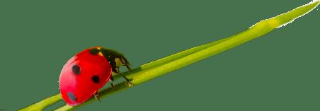 cs-beetle