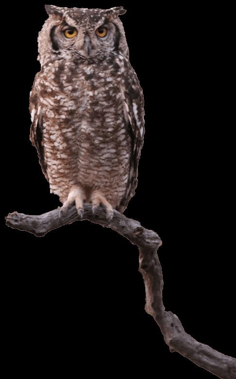 cs-owl
