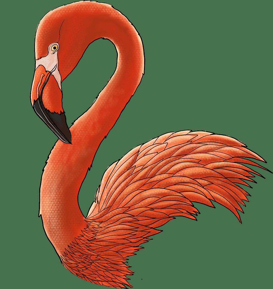 cs-flamingo-illustration