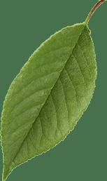 leaf_002