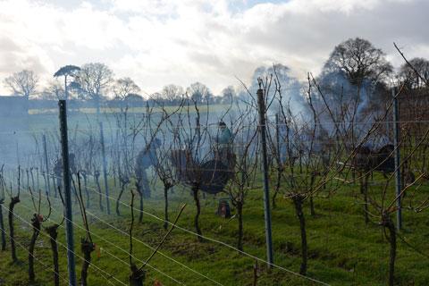 Vineyard Pruning in February