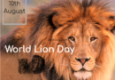 World Lion Day 10th August 2020