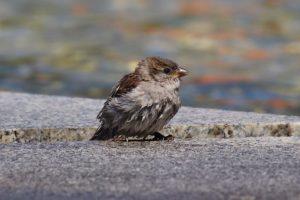 Zaštitimo ptice u Beogradu