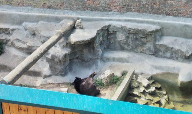 Medved Uroš i malo igre ( Video)