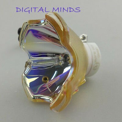 Online price pt projector lamps