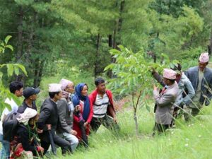 MITO - favourable climate for nut cultivation
