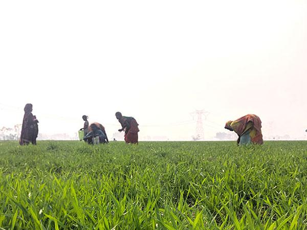Pragya - New cultivation methods secure harvest