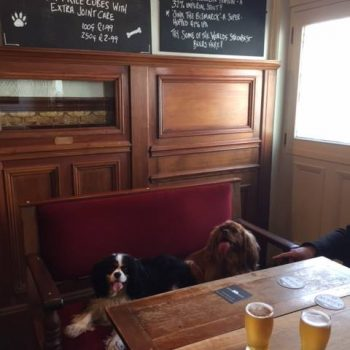 the dogs in the albion