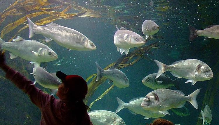 anglesey-sea-zoo