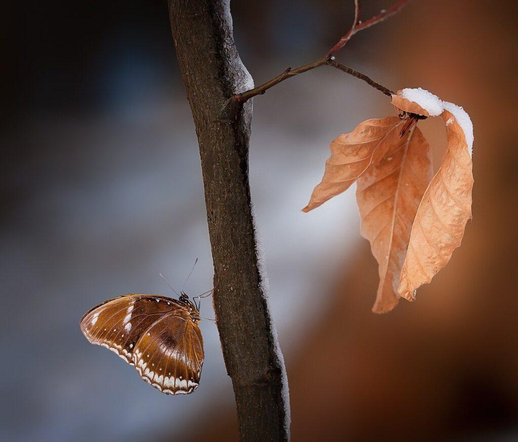 branch, leaves, butterfly-1226873.jpg