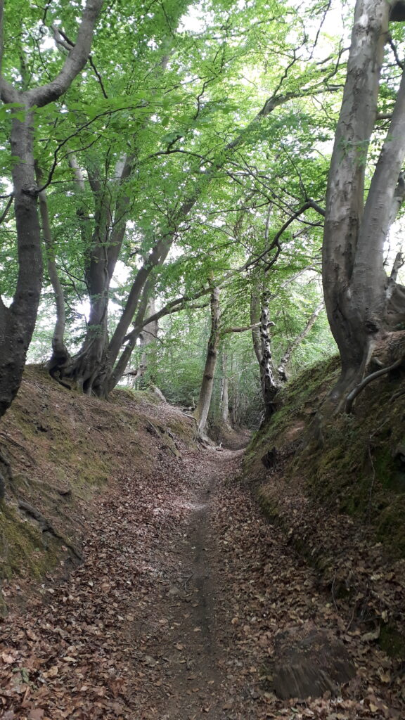 Forest path, Greensand Way