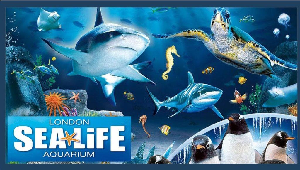Under the Sea: The London Aquarium