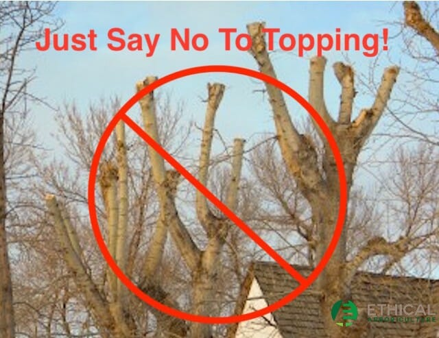 Just say no to tree topping