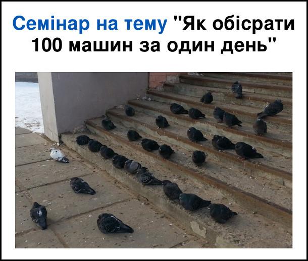 """Смішна фотка Голуби. Семінар на тему """"Як обісрати 100 машин за один день"""". Голуб ходить біля східців, а на східцях сидить багато голубів і дивляться на нього, ніби викладач і студенти, чи слухачі."""
