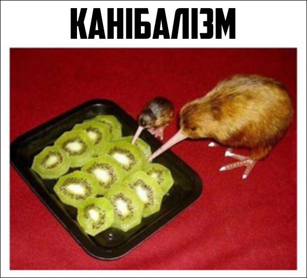 Канібалізм. Ківі (птахи) їдять ківі (фрукт)